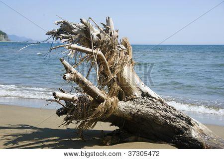 Snag On The Beach