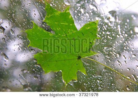 Ahornblatt auf dem Fenster