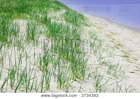 Green Grass At The Beach