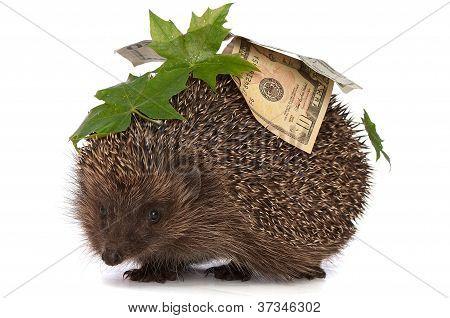 hedgehog with money profit