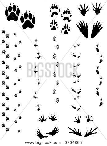 Animal Tracks 01