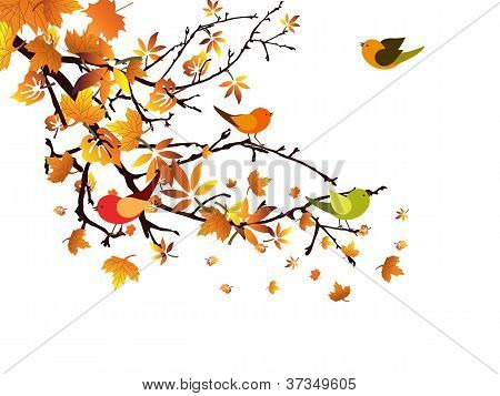 Autumnal branch