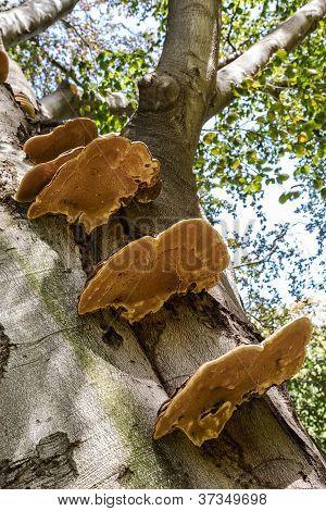 Parasitic Fungi On A Tree Trunk