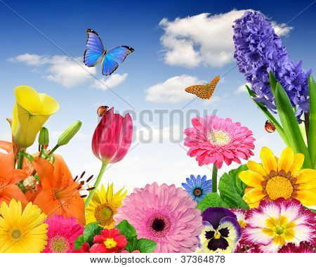 floral background with ladybug and butterflies