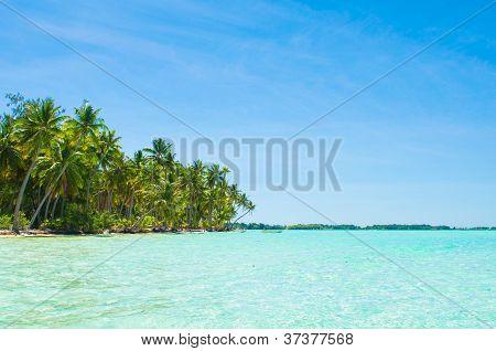 Paradise water