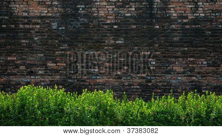 Green Bushes And Brick Wall