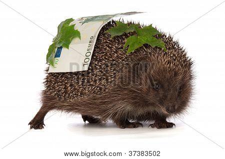 hedgehog with euro profit