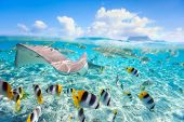 stock photo of french polynesia  - Colorful fish - JPG