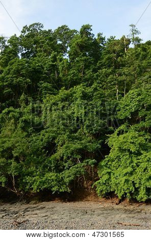 Trees In Tropical Rainforest In Panama