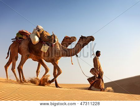Camel Man Leads His Camels Across The Thar Desert