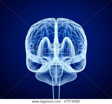 Brain scan, X-ray , front view