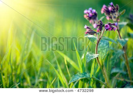 Fresh Spring Background