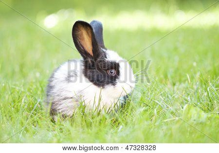 Rabbit bunny baby in green grass in the garden