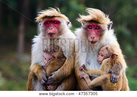 Affen-Familie
