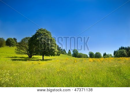 Idyllic Rural Scenery With Green Meadow And Deep Blue Sky