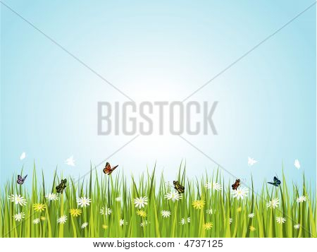 Butterflies In Grass