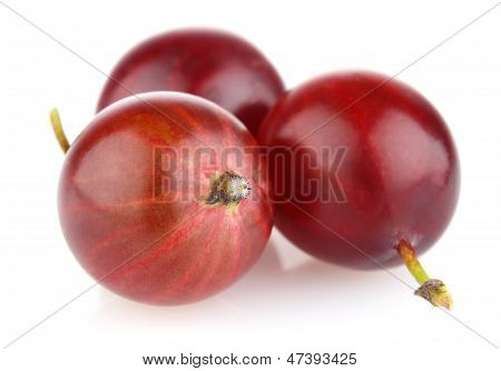 Ripe Red Gooseberry