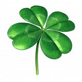 stock photo of clover  - Four leaf clover plant as an Irish symbol for a green lucky charm icon of good luck and fortune as an opportunity for success isolated on a white background - JPG