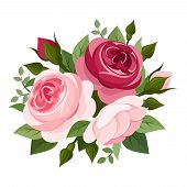 image of english rose  - Vector illustration of red and pink English roses - JPG