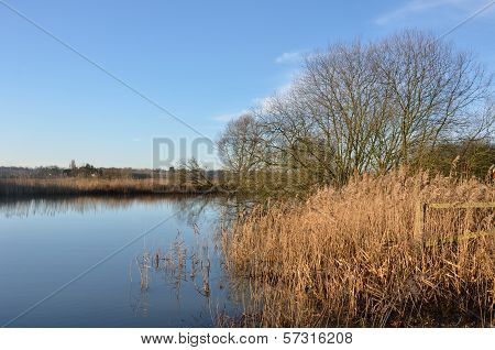 Winter river with reeds