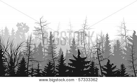 Horizontal Illustrations Of Coniferous Wood.