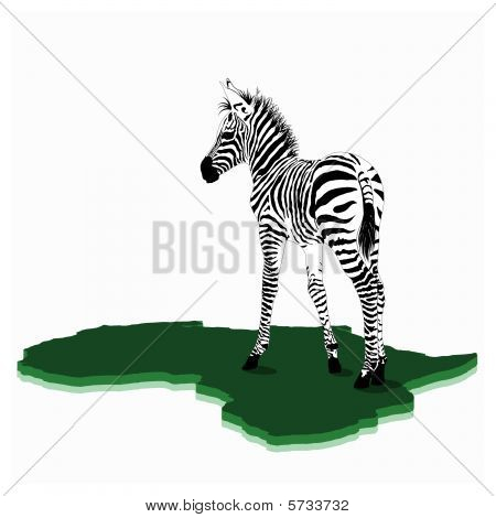 African Baby zebra illustration
