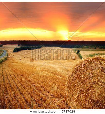Hay Straw Bale Field