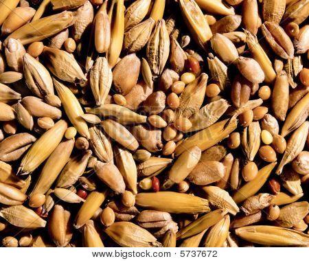 Texture Of Grain