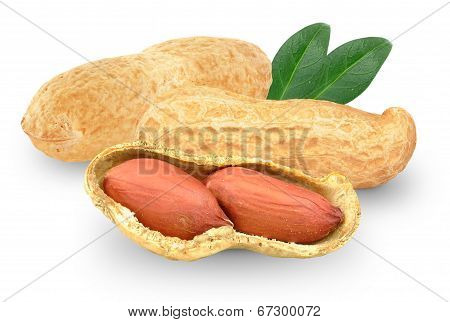 peanuts with leaf