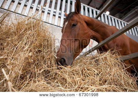 Horse Eats Hay From A Hay Rack