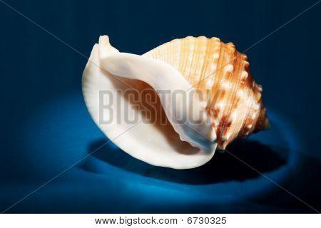 sea shell close up