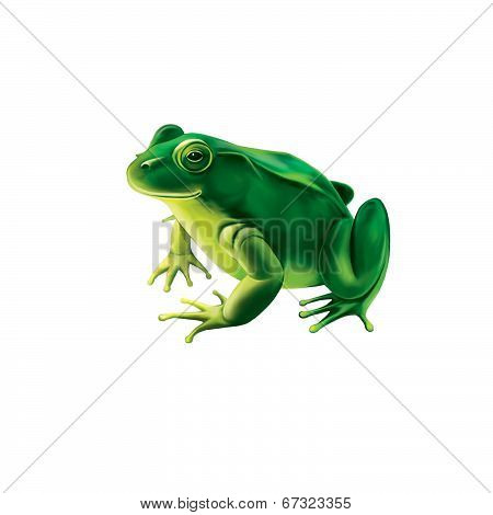 Green frog with spots, spotted toad