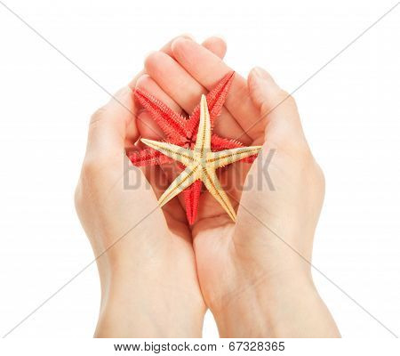 Colour starfishes in the hands