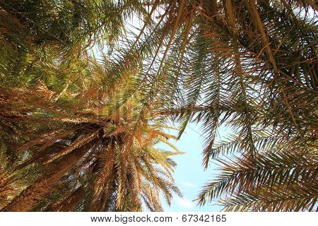 Blue sky and palm trees fronds