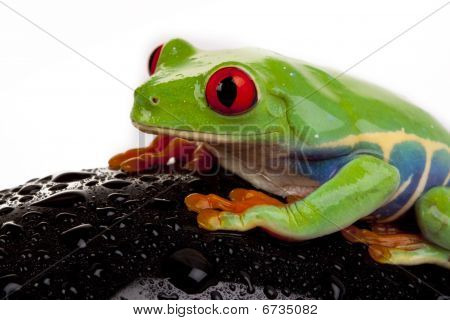 Frog and Toy