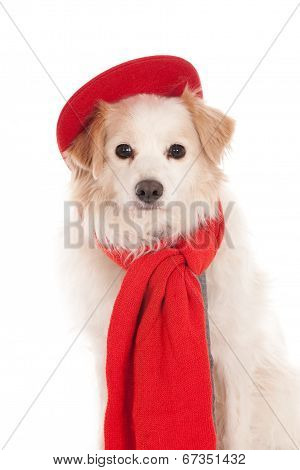 Dog with red cap and scarf