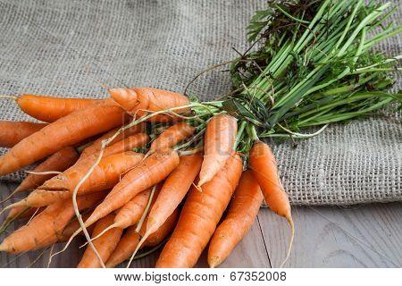 Carrots On Sack