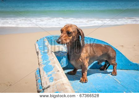 Dog In The Beach