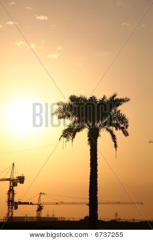 Cranes Guarded By Palm Tree On An Evening Sun