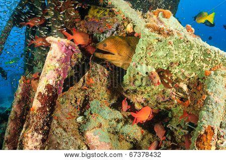 Moray Eel and tropical fish