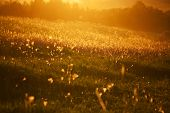 stock photo of tall grass  - Beautiful meadow with tall grass in the evening sun - JPG