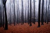 picture of trough  - Autumn in a forest with frost and fog trough the trees - JPG