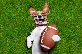 pic of prize  - soccer dog holding a rugby ball and laughing out loud - JPG