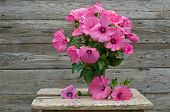foto of petunia  - Fresh garden pink petunia bouquet in vase on wooden table - JPG