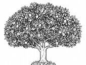 picture of ecosystem  - Engraved apple tree full of ripe apples - JPG