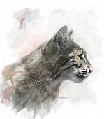 image of bobcat  - Watercolor Digital Painting Of Bobcat - JPG