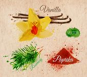 stock photo of vanilla  - Spices herbs set drawn watercolor blots and stains with a spray vanilla - JPG