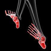 ������, ������: Foot Bone