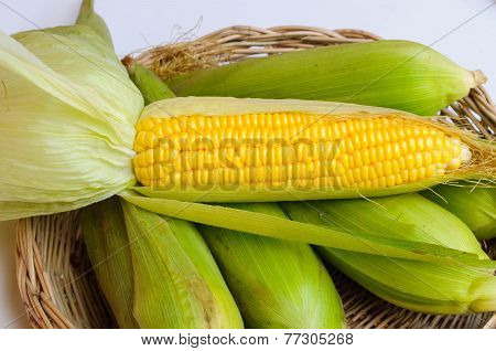 Fresh Corn In Basket On White Background