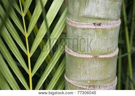 Bamboo Closeup